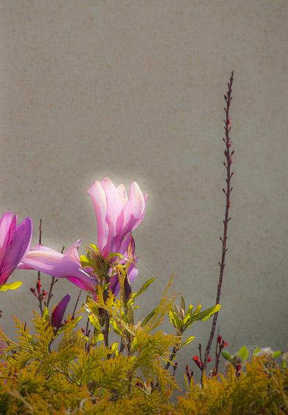 FlowerGlow_1986