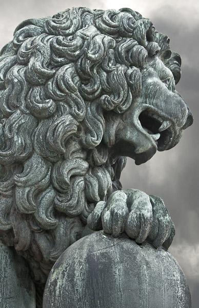 Lion_6064