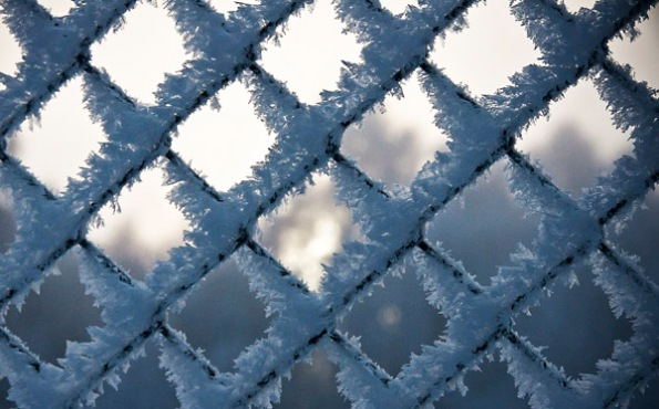 FrostedFence0_4250