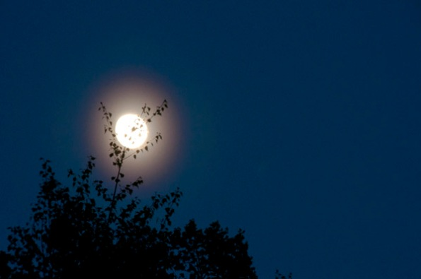 MoonBranches_7944