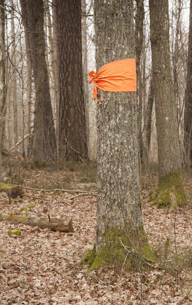 TreeExecute_1460