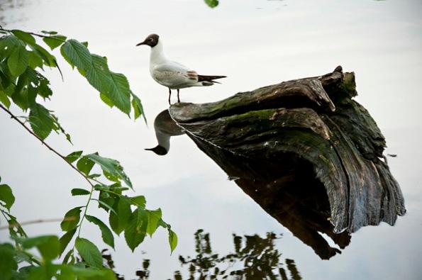 BirdTreeTail_8050