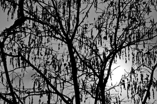 TreeSilhuette_6195