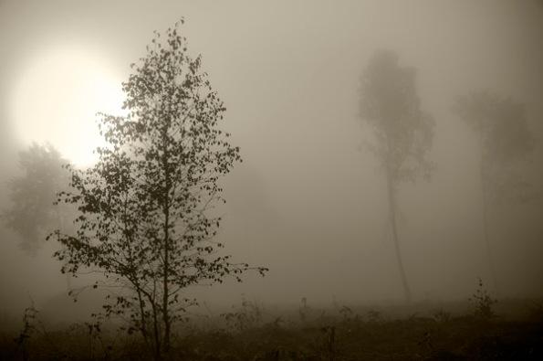 MistySunTrees2_5966