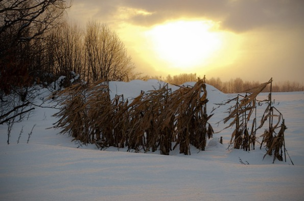 SnowCornLight_4892