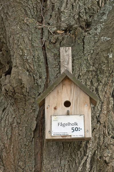 BirdHouse6_7524
