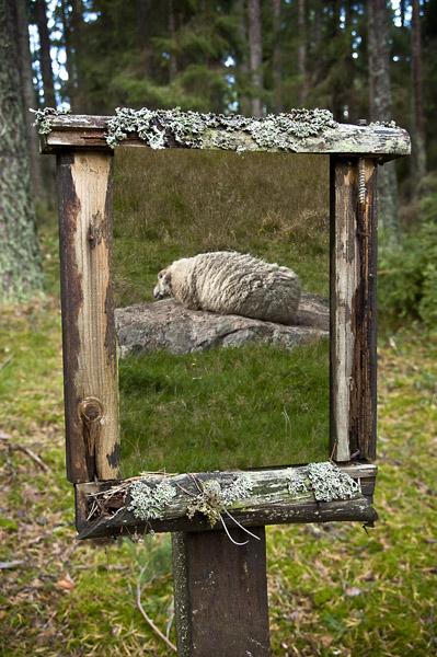 framedsheep_0377