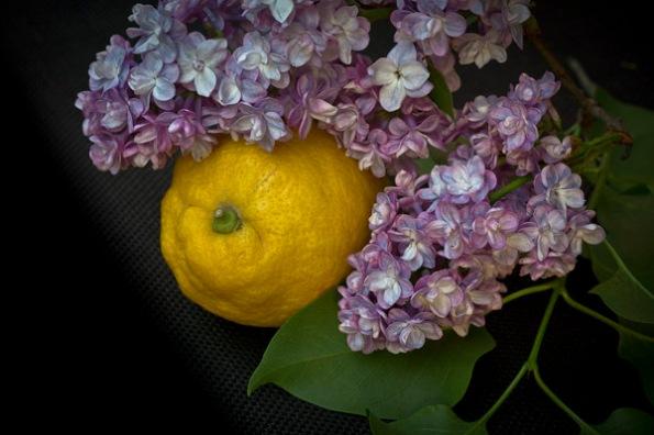 LemonLilacs4_8771