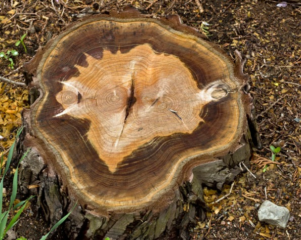 TreeTruckHistory8_8637