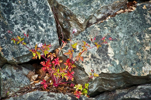 FlowersRocks1_9137