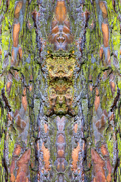 Saturated mirrored bark