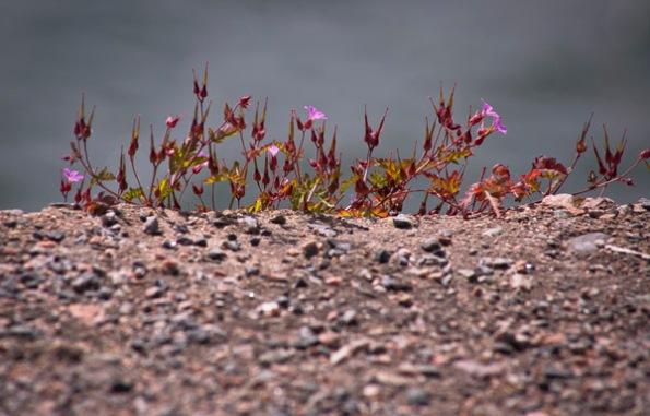 FlowersStones7_9239