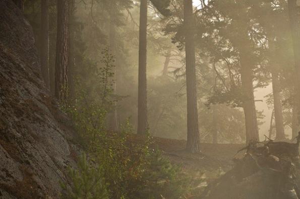 FoggyForest2_0025