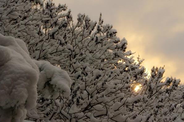 SnowBranches_5033