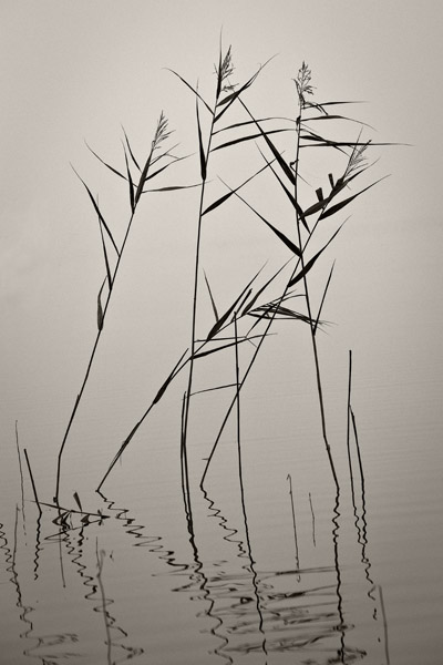 ReedsFog2_0004