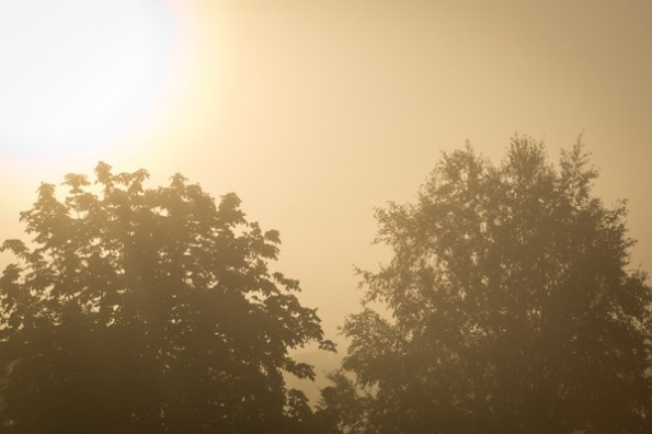 FoggyMorn4_3516
