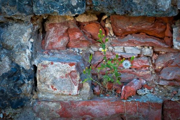 BrickWeed7_3569
