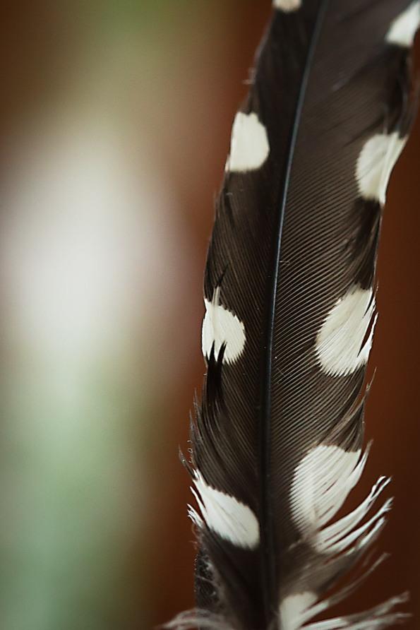 FeatherDots9160