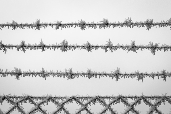 frostedwire1020560