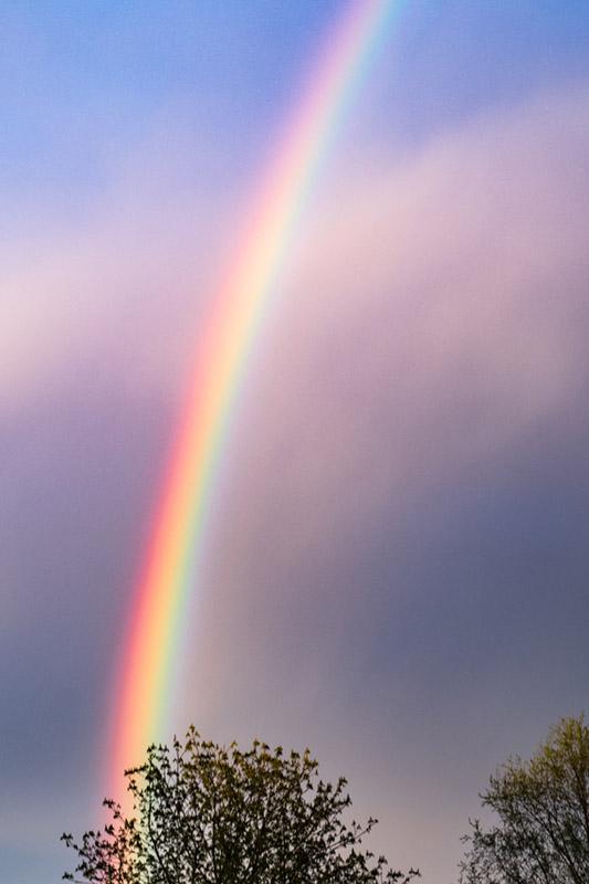 Rainbow-1030416