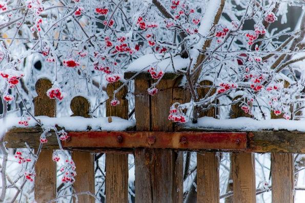 WinterLönnΩ_0492