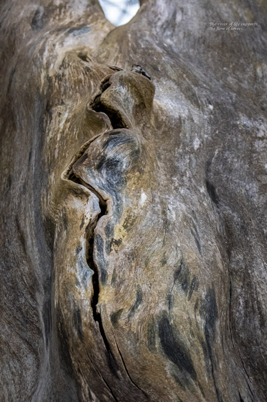 tree, old, barkless, two figures, flow, crack, grain